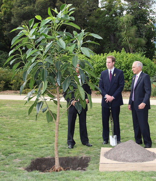 Tree planted at Government House during Prince William's 2010 visit.